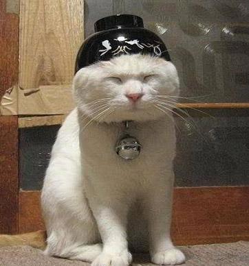 Кот японец
