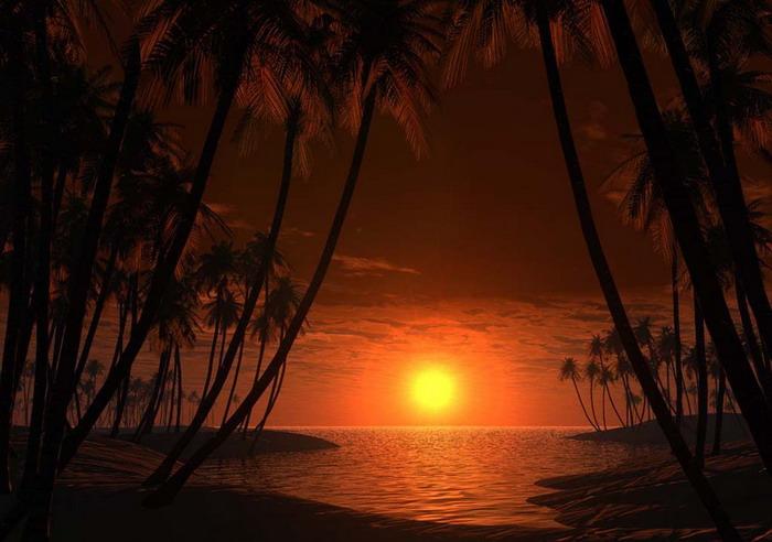 Между пальм