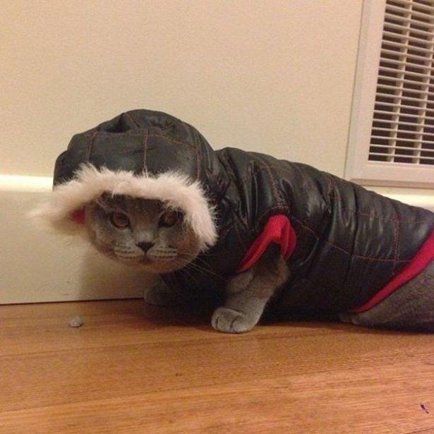 К зиме готов