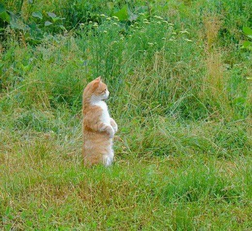 Кто там ходит в огороде?