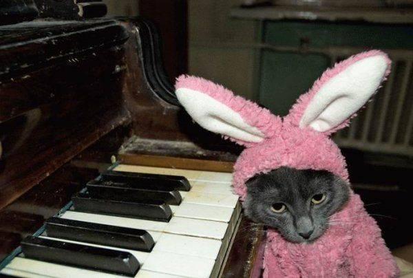 Играть на пианино любят не только люди. Но и кошки в костюме розового плюшевого зайца