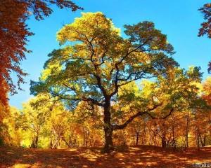 Осенный лес