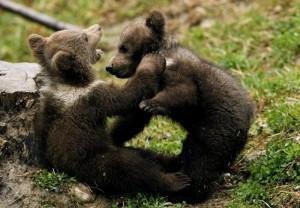Игра медвежат