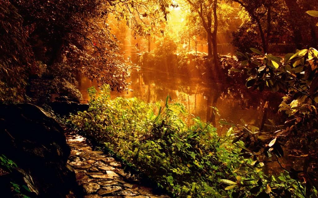 Красивый закат у лесной реки