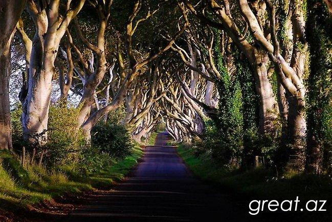 Аллея Буков «Темный Тупик», Ирландия