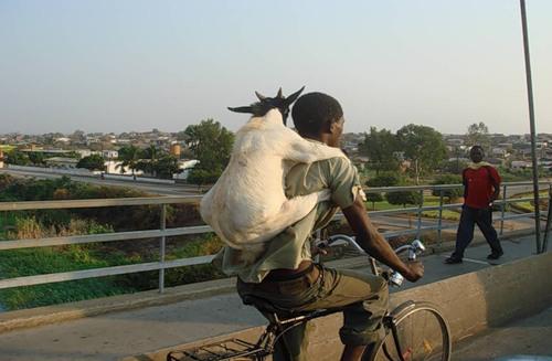 в африке думаю о животных