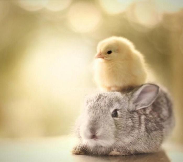 Верхом на зайце