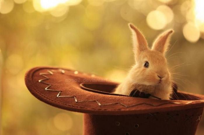 Кролик из шляпы