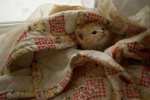 Под одеялом