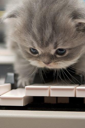 Усатый музыкант