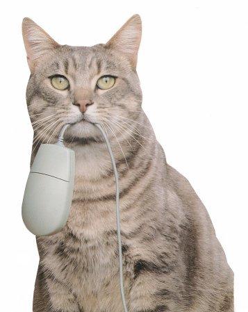 Перепутал мышки