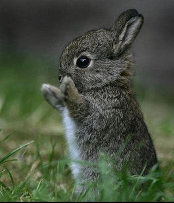 Зайчонок хочет обнять