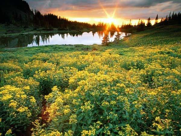 Среди полевых цветов