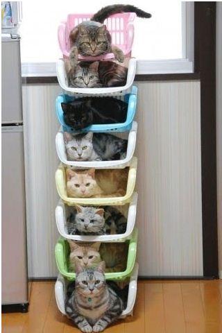 Кошачья высотка