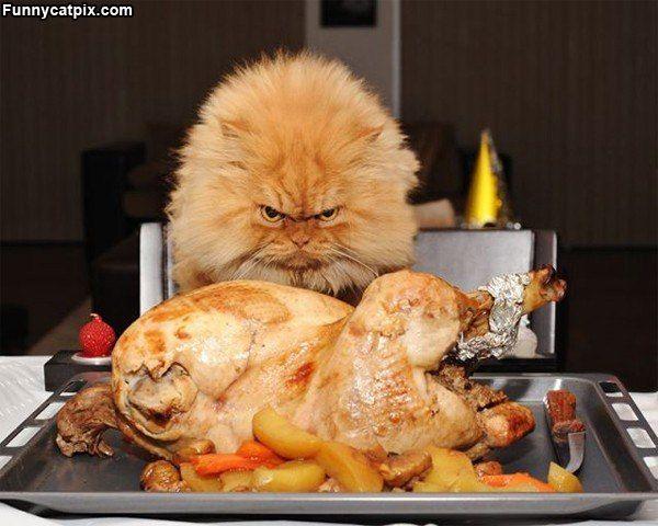 Опять эта курица… Достали