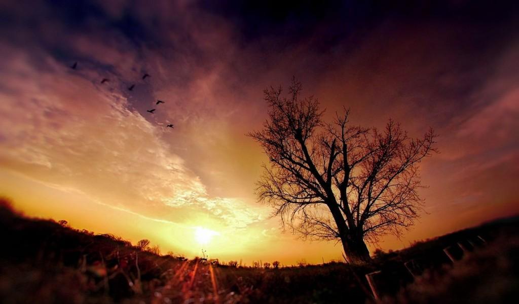 Природа на закате