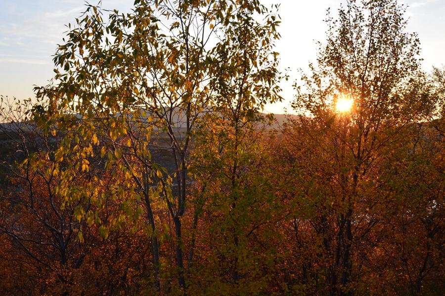 Солнце запуталось в листве