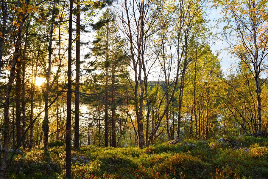 Берег реки Тулома, солнце осени