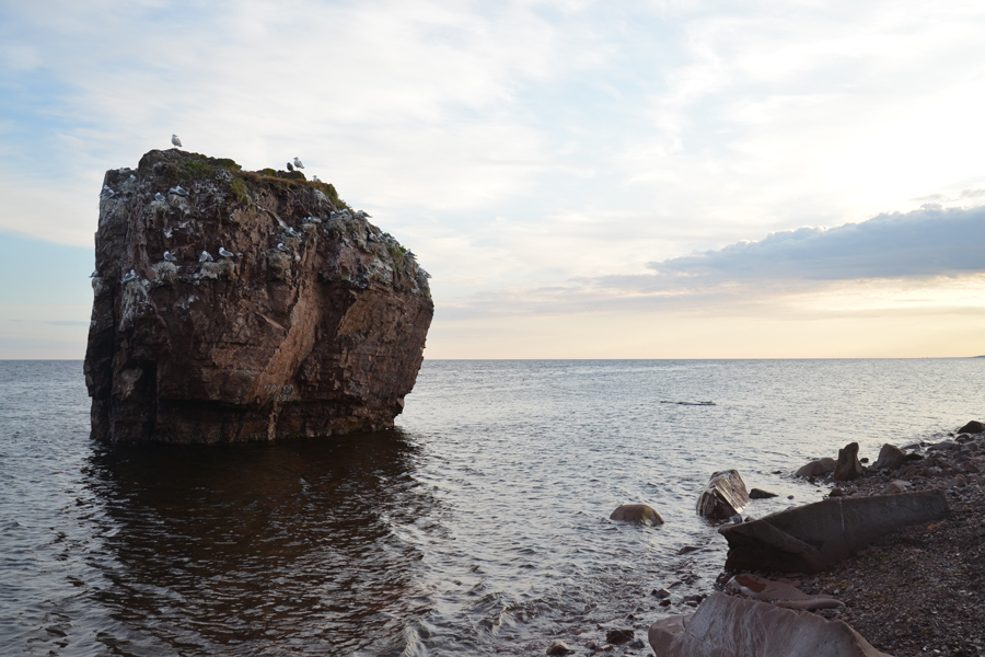Побережье Белого моря, птичий базар