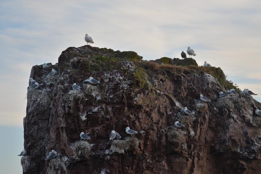 Птичий базар, Белое море