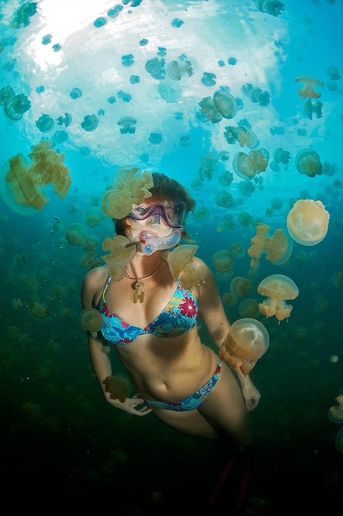 Озеро медуз, Палау.