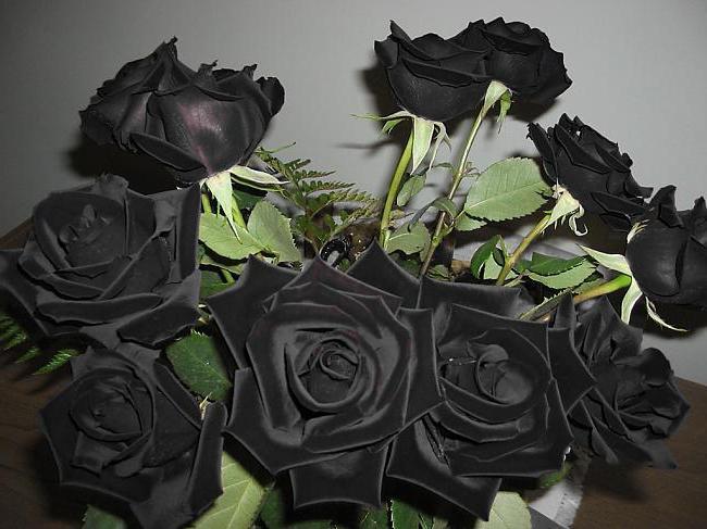 Черные розы