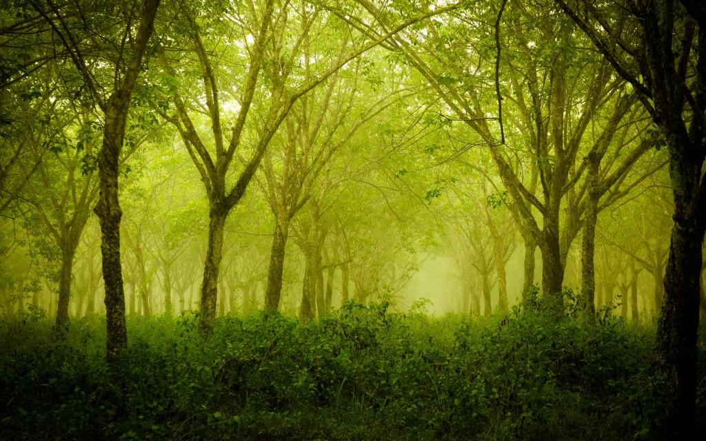 Зеленый сумрак