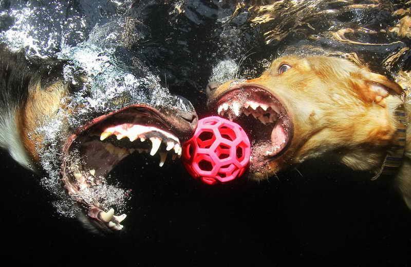 210 Сет Кастиль - подводные собаки