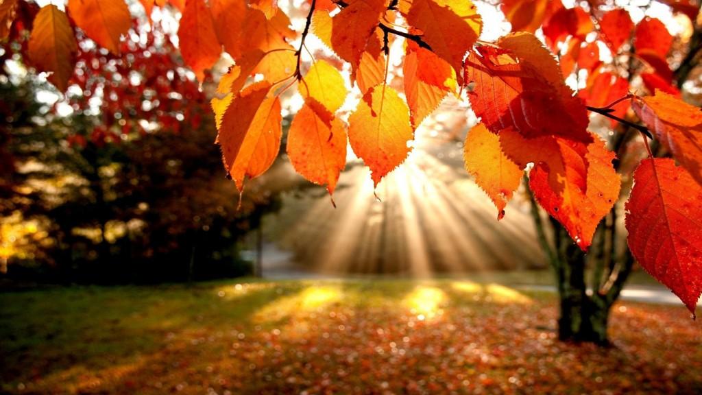 Листья - релакс фото