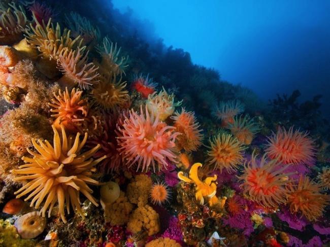 Подводный мир Шпицбергена, Норвегия