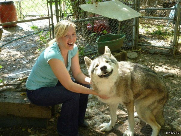 Улыбающийся волк