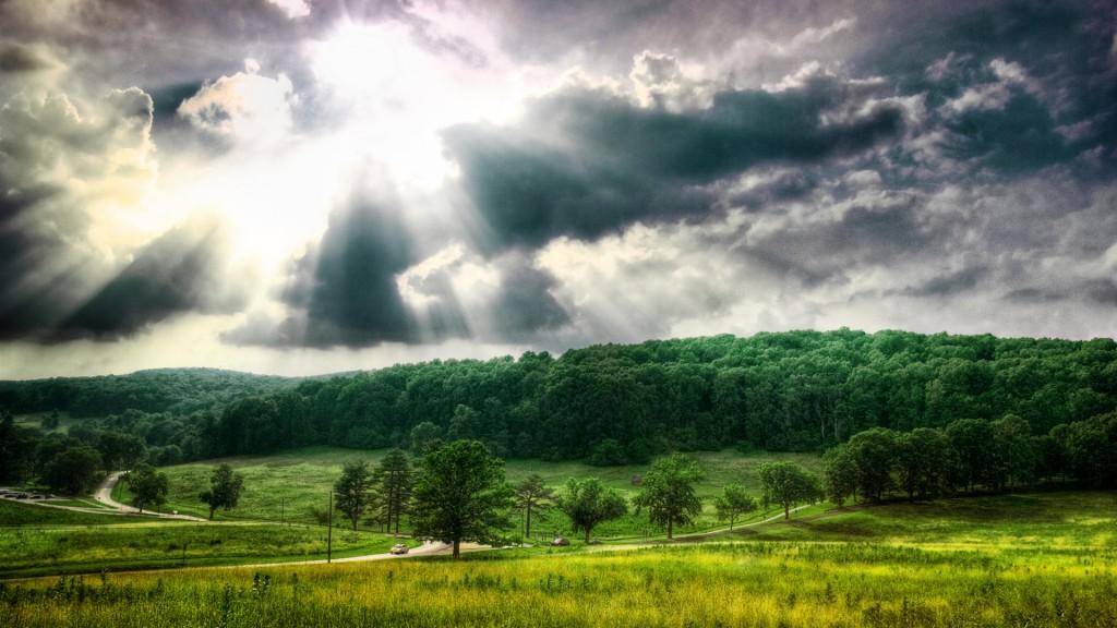 Лес в непогоду