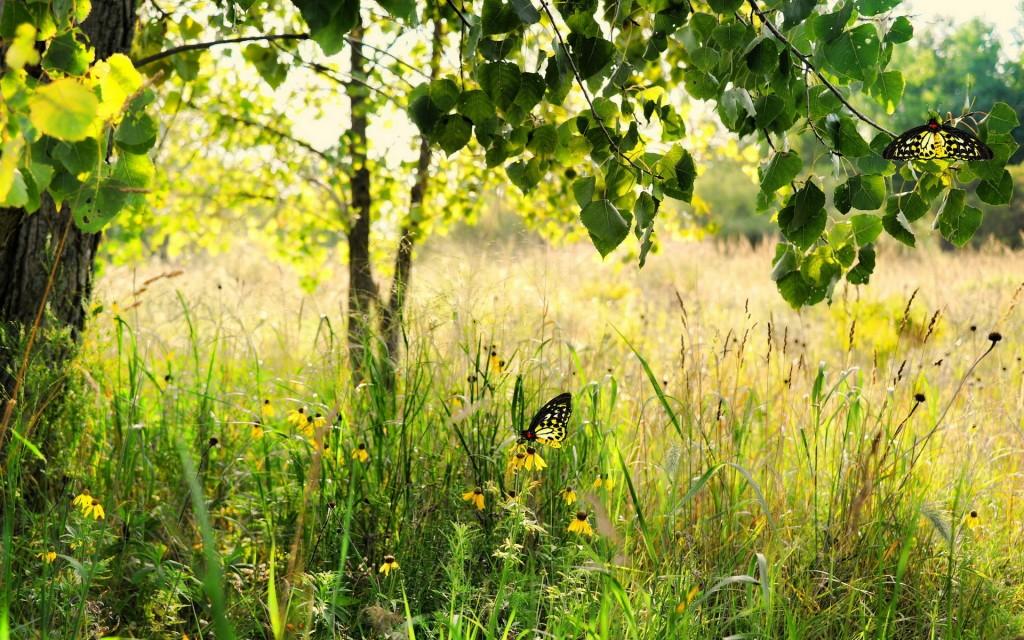 Бабочка в траве
