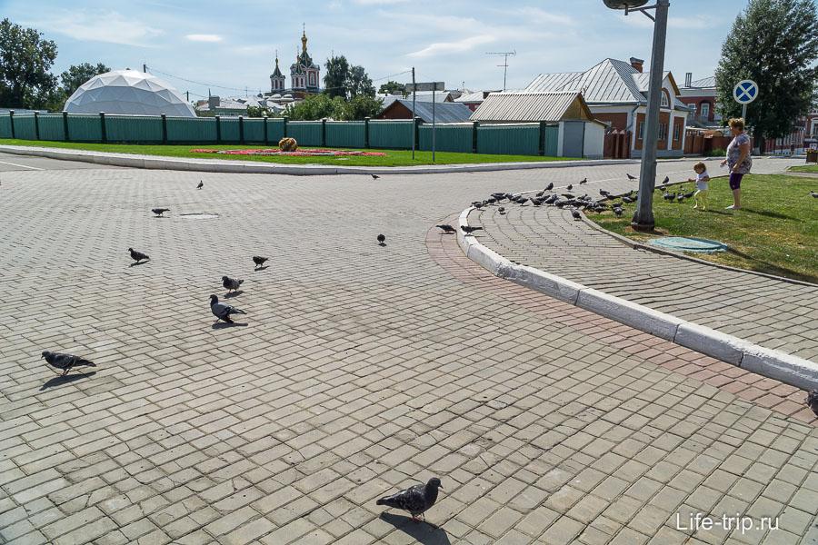 коломна9гоняют голубей