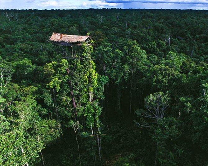 250 Экстремальный домик на дереве