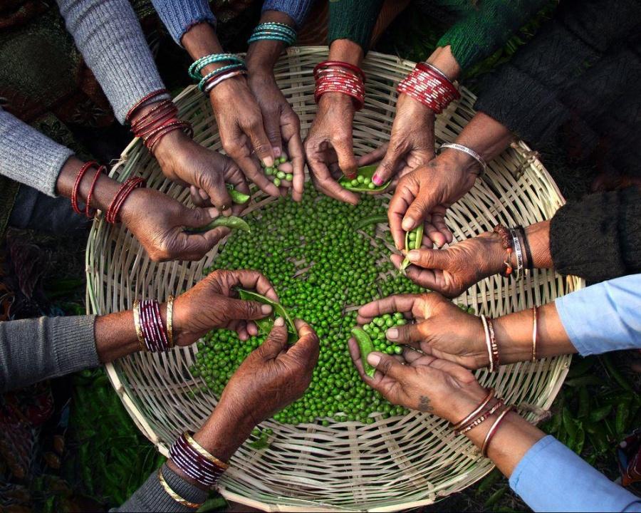261 Вместе веселее, Индия