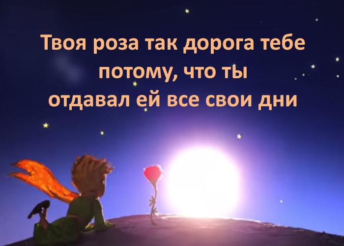 цитаты маленького принца сент экзюпери
