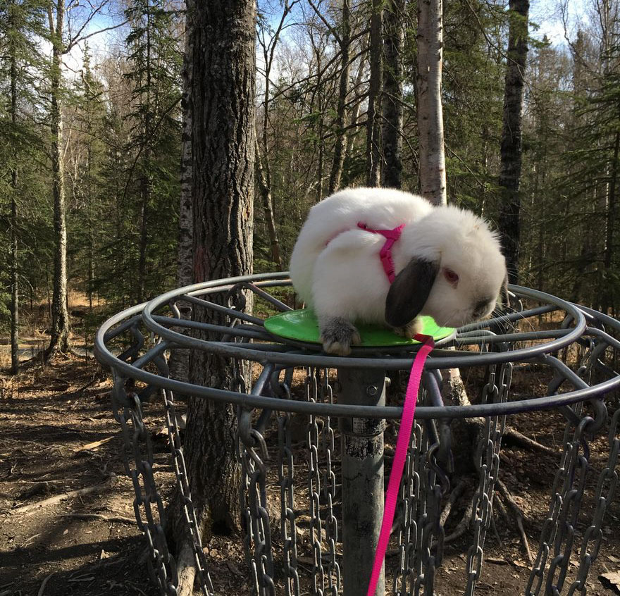 кролик Квинси герой интернета